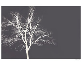 Nature Photography PRINT, White Branches - 3, Wall Art