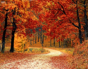 Fall Road, Backdrop, Background, Trees, Fall Leaves, Nature, Digital Download