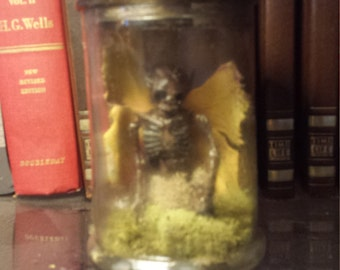 Fairy Specimen in Jar