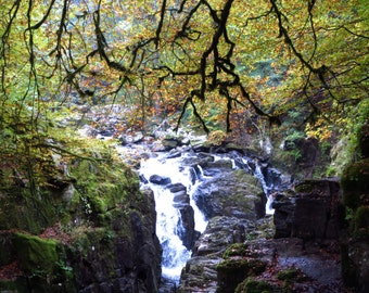 Scotland Forest Photography Print