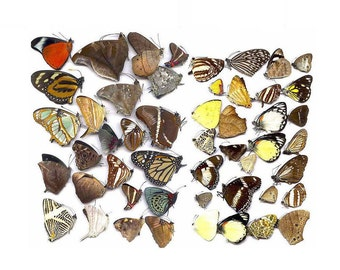 Butterflies taxidermy natural beautiful small butterfly craft embellishments