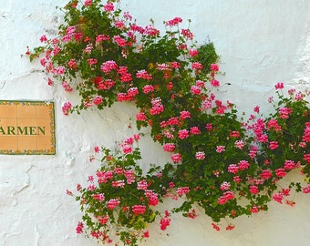 Fascinating Geraniums on a Spanish Wall on Carmen Street, Old Marbella-Fine Art Photography-Blank Greeting Card-Copyrighted