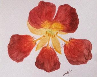 "Original Watercolor Painting ""Nasturtium"""