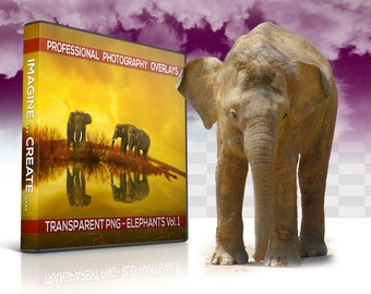 10 Elephants Transparent PNG Animal Overlay, Photo Overlays, Photoshop Overlay, Photography Background, Digital Background, Digital Backdrop