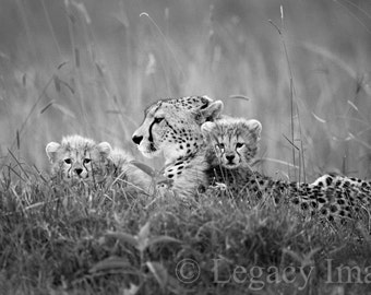 Animal Photography, Baby, Cheetah, Photo, Wildlife, Photography, Black And White, Africa, Safari, Animal, Photograph, Wall Art, Nursery, Art