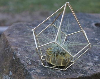 Geometric Air Plant Terrarium