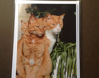 Ginger cat and kitten photography blank cards - set or individual