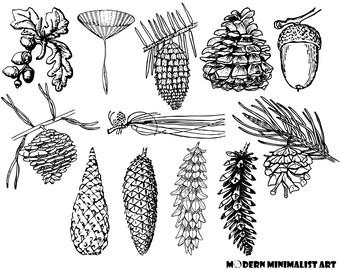 12 PNGS, Vintage Cones and Acorns, Vintage Pine cone, Vintage Acorns, Pine Cone Clipart, Acorn Clipart, Pinecone, Antique, Pinecone Graphics