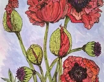Poppies- Papaver Orientale