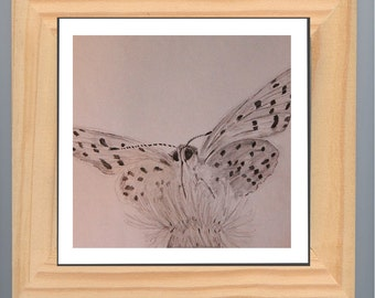 Butterfly. Original pencil drawing on the paper. From insekt collection. Handmade illustration