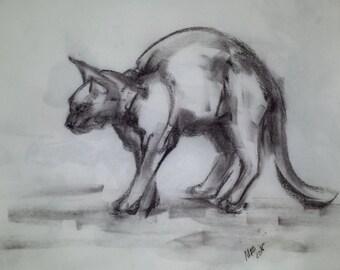 Walking homeless cat.