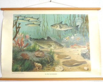 Pull Down Chart  Vintage Zoological Pull down school chart 'The North Sea', School chart, Fish, Scenery. #642GEA6K25