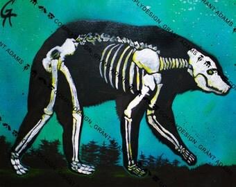 X-Ray Bear