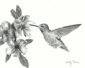 Hummingbird with flowers 11x14 print pencil black and white Hummingbird picture