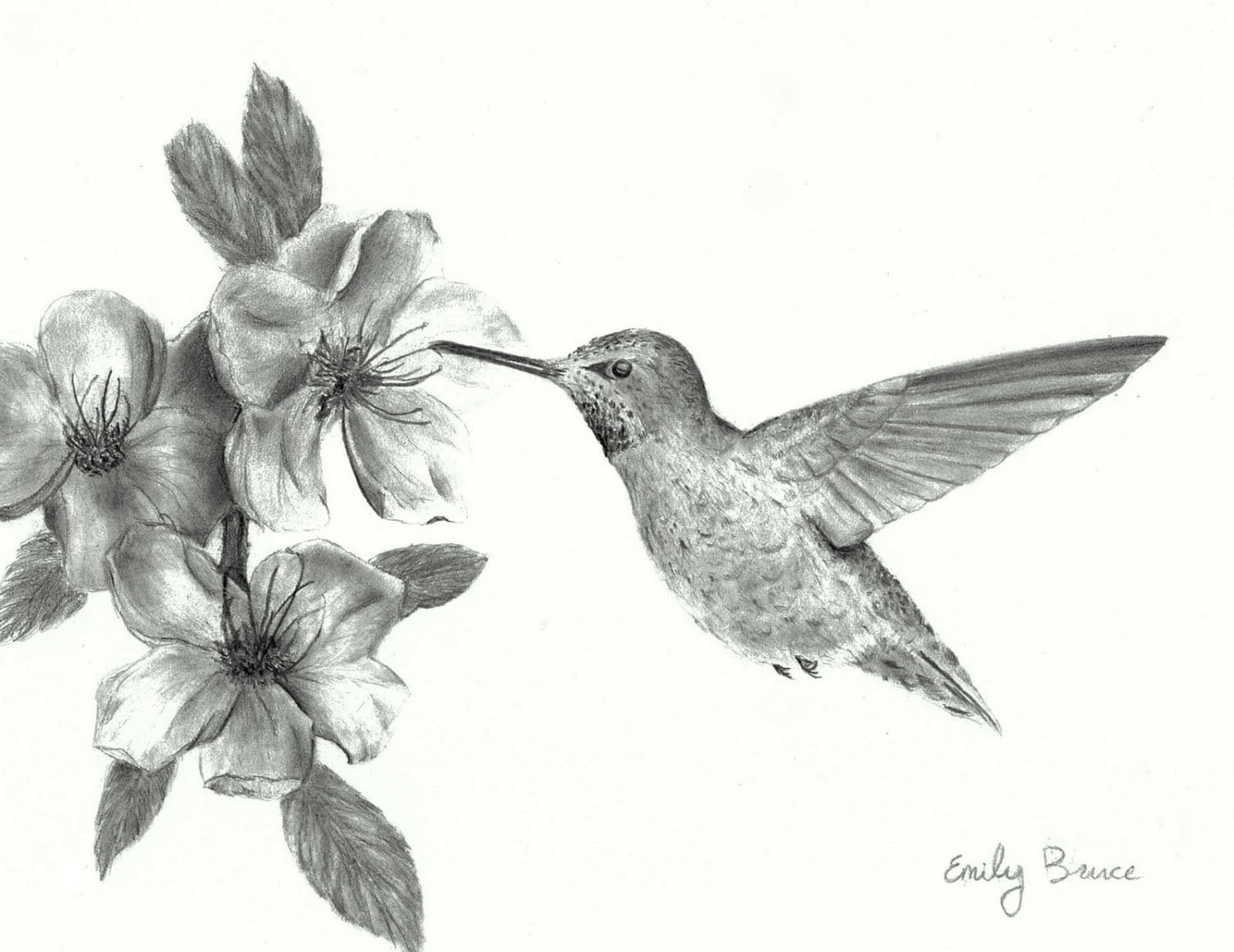Hummingbird With Flowers 8x10 Print Pencil Black And White