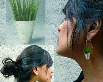 Earrings 925 Silver herb pot