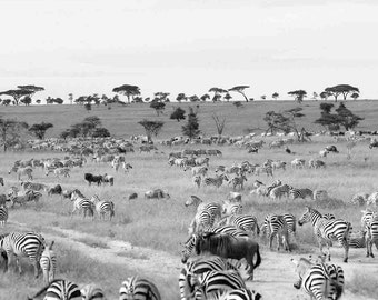 The Great Migration Africa photo print