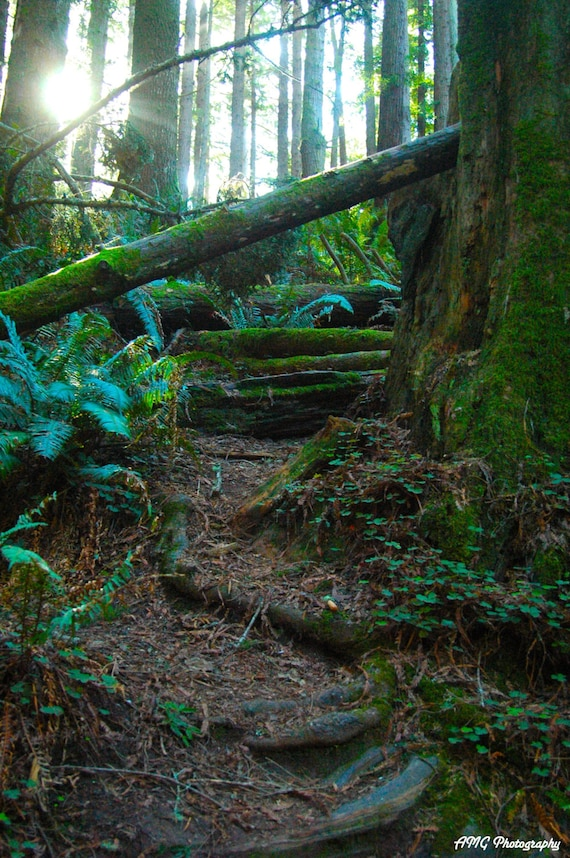 Redwood Stairs