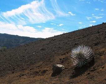 Haleakalā Silversword Maui Hawaii