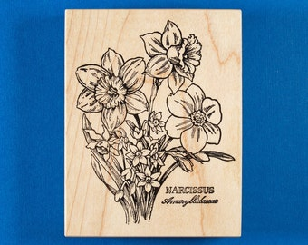 PSX Narcissus Botanical Rubber Stamp - Daffodil Flowers with Latin Scientific Name - Spring Garden Bulbs - Personal Stamp Exchange K-1282
