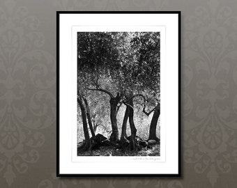 Black and white art photography, italian olive trees, 30x40cm giclee print, olive grove, mediterranean print, italy art print, home decor