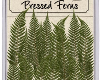 Pressed Feather Fern 16 pieces