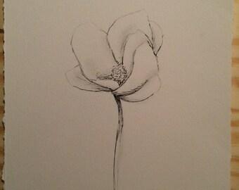 Magnolia Bloom - pencil - full bloom