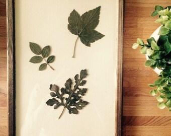 Herbarium 05