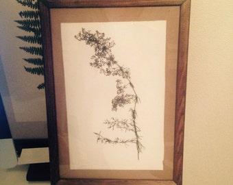 Herbarium 20