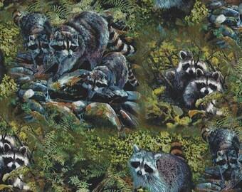Raccoon Families in the Woods, Springs