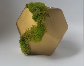 Geometric vase with moss