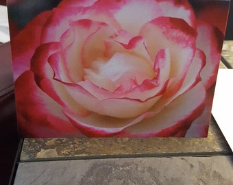 A Rose is a Rose -   4x5.5  Blank Greeting Card  - Set of 4 Cards