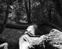 Gnarled Oaken Branch