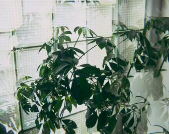 Fractal Plant 1 - 12 X 8 Photographic Print