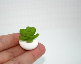 Miniature dollhouse succulent in white pot