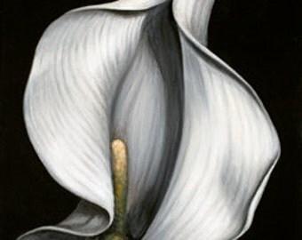Lily White #3