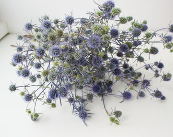 Dried Eryngium, Blue Thistles, dried Flowers,natural materials, floral