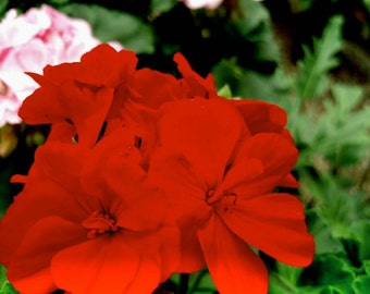 Very beautiful flower covered in red