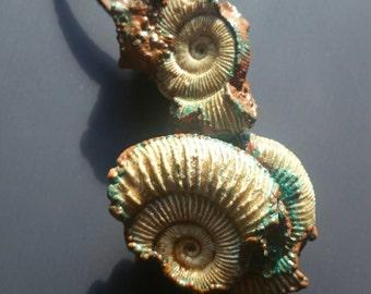 Electroformed Fossil Ammonite Pendant