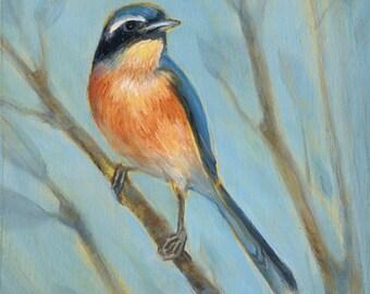 Indian Blue Robin Print, bird art