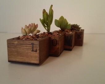 Unique Succulent Planter
