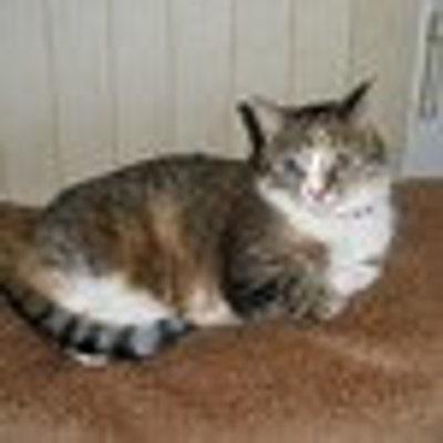 catlady531