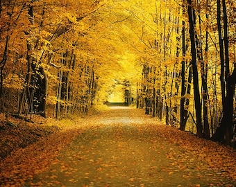 Fall Photography, New England Decor, Autumnal Wall Art, Fall Foliage, Orange Print, Golden, Road, Path, Woods, Forest, Gold, Autumn Photo