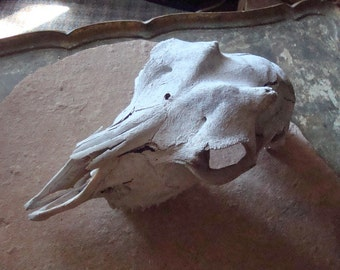 Goat or Sheep Skull Weathered Old Found Object for Assemblage, Altered Art
