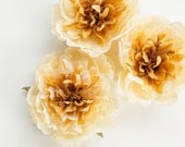 Cream and Golden Yellow Peony -  4.5 Inches - Silk flower - Artificial Flower - ITEM 0452