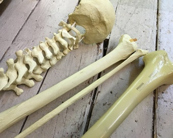 Lot of five Medical human bones for re-purposing made of resin and plastic not real