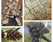 Woodland print set, 4 photo set, gallery wall art, wall art set, four print set, forest print set, cabin decor, nature decor, tree photos