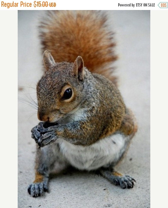 40% OFF SALE Squirrel Art, animal photograph, squirrel picture, nature photography- 5x7 inch Photo Print - Mr. Perfect