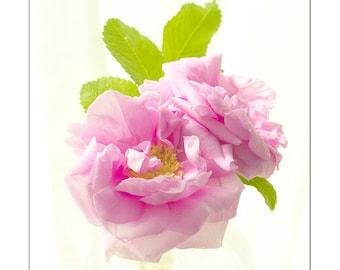 Rose Flower Art, Pastel Fine Art Print, Pink Rose Photo, Nature Wall Decor, Flower Print, Pink Nursery Decor