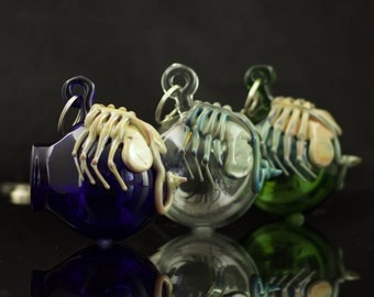 Facehugger Glass Globe Hanging Terrarium in You Choose the Color, Made to Order